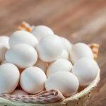7 Manfaat Makan Telur Ayam Kampung Asli Yang Wajib Anda Ketahui