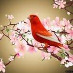 25 Jenis Burung Kenari Yang Bagus dan Memiliki Suara Keras