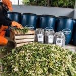 Inovasi Pakan Ternak Dari Limbah Sayuran Pasar Tradisional Yang sederhana
