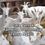 8 Cara Ternak Kambing Dan Domba Modern Tanpa Ngarit Rumput Cocok Untuk Karyawan